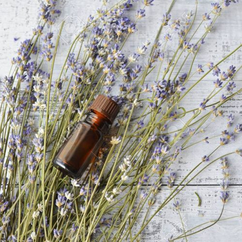 Organic herbal oil and fresh lavender flowers on light old wooden background, top view